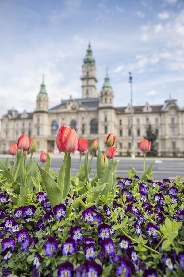 Városháza előtti virágok tavasszal